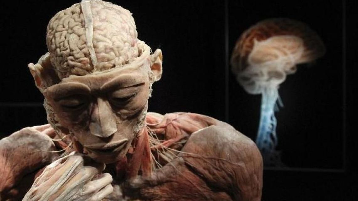 "Expozitia ""The Human Body"" la Muzeul Antipa!"